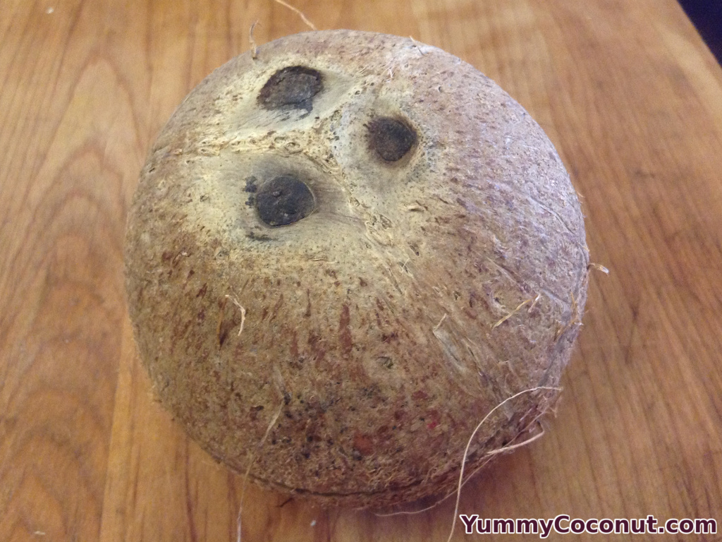 Mature Brown Coconut